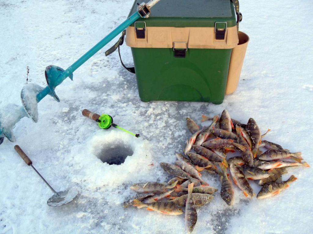 в марте какая рыба клюет